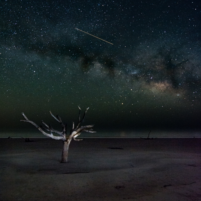 Lone Tree Under the Milky Way. Hunting Island, South Carolina